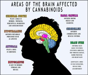 areas of brain affected by cannabinoids